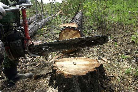 Доставка Москве не законная вырубка деревьев в тобольске выборе термобелья следует