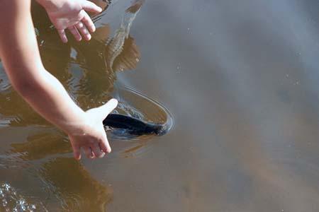 пока как поймать рыбу руками как организовать