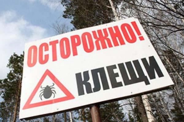 Занеделю вКрасноярском крае клещи покусали неменее 60 человек