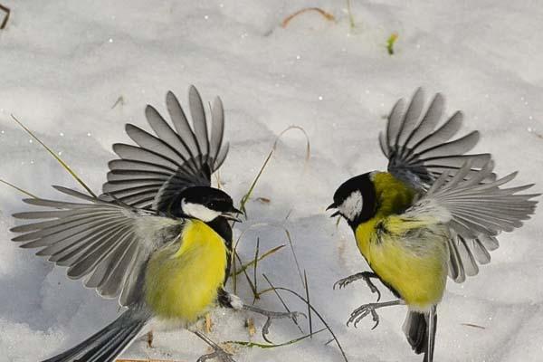Сегодня в Тобольске потеплеет. Раки, споры к хорошему не приведут, фильтруйте общение!